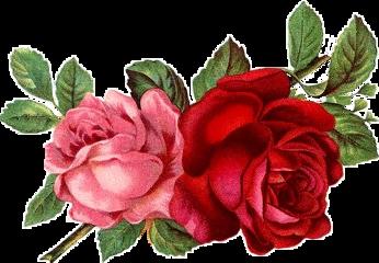 vintage flower flor rosa naturaleza freetoedit