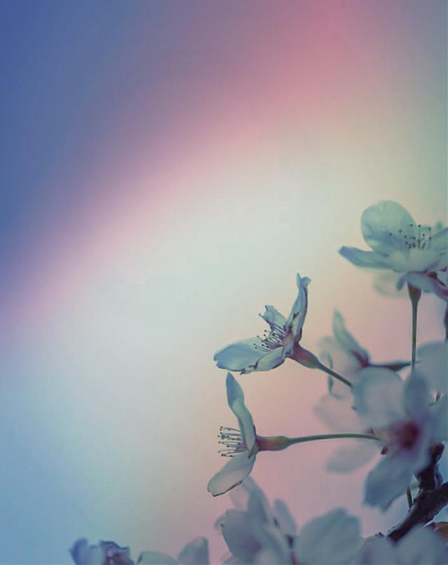 #nature #treebranch #flowers #flowerybranch  #naturesbeauty #simpleflowers #minimalisminnature #prism #softness #natureshot #minimalphotography                                                                                                                                             #freetoedit