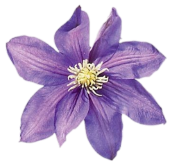 stickersjani jani flowers flores freetoedit
