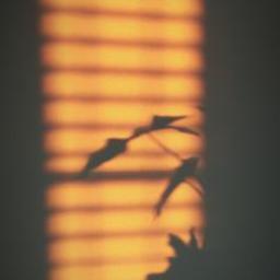 sunblinds sun sunshade shadows sunlight lightphotography blinds goldenhour freetoedit