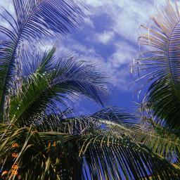 palms freetoedit aesthetic huji photo