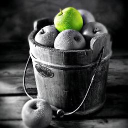 freetoedit apples blackandwhite blackandwhitephotography greenapples eccolorpop colorpop colorsplash