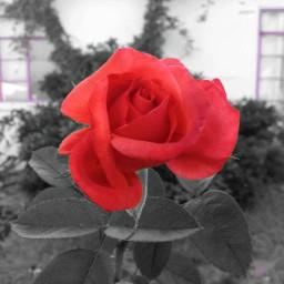 freetoedit flowerpower mypic eccolorpop colorpop