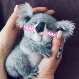 freetoedit staysafe adorablekoala ectoocute toocute