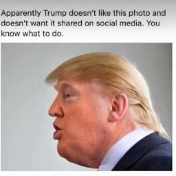 trump donaldtrump politics president uspresident freetoedit
