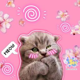 ectoocute toocute shazahom1 cat