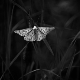 freetoedit photography naturephotography naturelovers monochrome