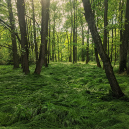 nature trees green background backgrounds freetoedit