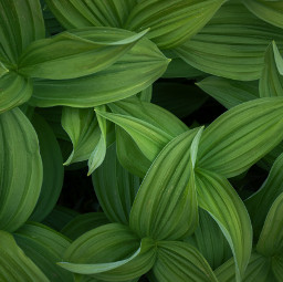 plant green nature background backgrounds freetoedit