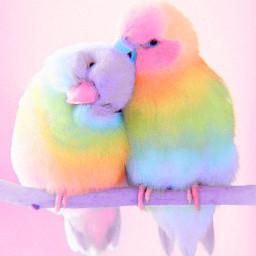rainbow parrot rainbowparrot googleimages cute