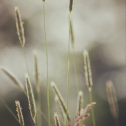 freetoedit photography nature naturelovers background