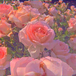aesthetics aesthetic pink flowers pinkflower freetoedit