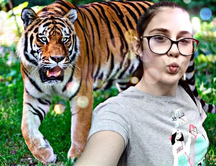 #tigre  _vikka_@KS