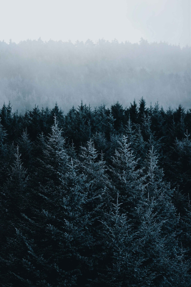Create a new mood for this image. Unsplash (Public Domain) #nature #trees #green #background #backgrounds #freetoedit