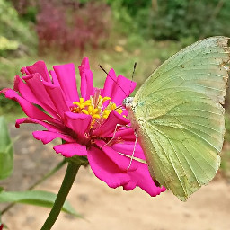 butterfly nature photography kerala india