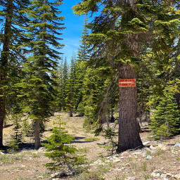 nature trees hike camp walk scenery freetoedit