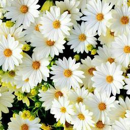 flowerpower flower cool summer sun