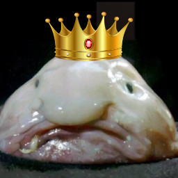 freetoedit blobfish