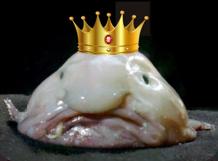 #freetoedit #blobfish