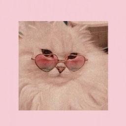 freetoedit aesthetic cats pink pinkaesthetic