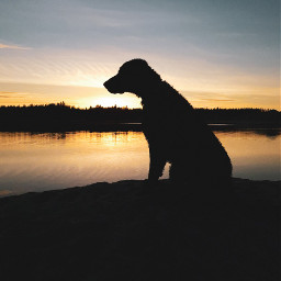 photography landscape curlycoatedretriever curlyboy curlylife