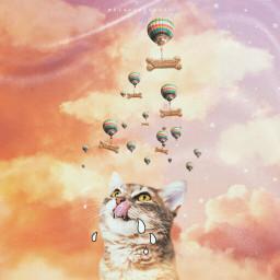 srchotairballoons hotairballoons madewithpicsart madebyme cat