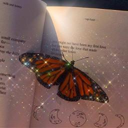 butterfly book wonderful beauty