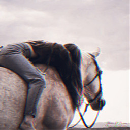freetoedit horse emotions nature vida