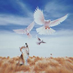 freetoedit cat sky fly birds