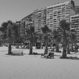 beach palm palms summer nice freetoedit