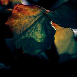 forest nature naturephotography photography leave freetoedit