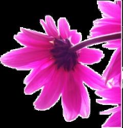 freetoedit pattern pink painting flowet