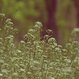 freetoedit followme follow4follow flower flowers flowerslovers flowerselfie flowersphotography flowersofinstagram floweroftheday flowerstyles_gf photography photooftheday myphotography photographylife photoediting summer nature naturephotography naturelovers naturesbeauty natureporn natureshot nature_perfection nature_brilliance