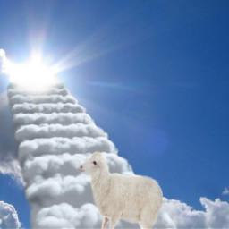 freetoedit kambing eidadha happyeidadha muslim srcsheepadventures sheepadventures