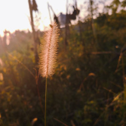 summer sunny plant nature myphoto freetoedit