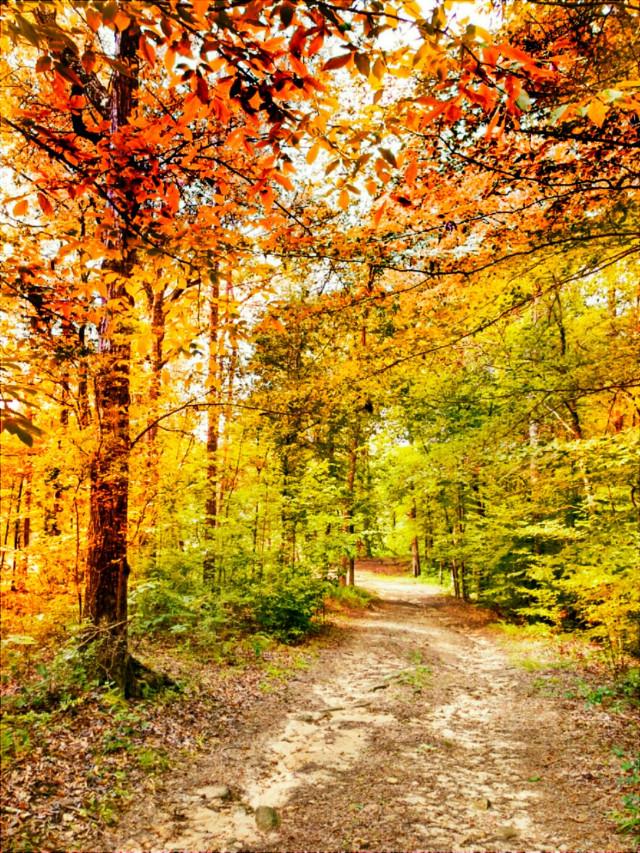 #freetoedit #picsart #picsartphoto #vipshoutout #wpptrees #nature #naturephotography #naturesbeauty #forest #color #changecolor #dailytag #dailyinspiration #challenge #gallery #remix #remixit #remixed