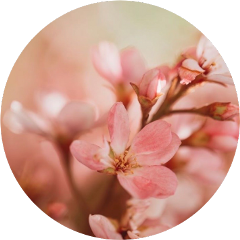 freetoedit flower flowers sakura flowerbackground background plsfollow plslikethis pinkflower circle