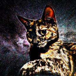 freetoedit hdr galaxy kittysticker meow😺 meow