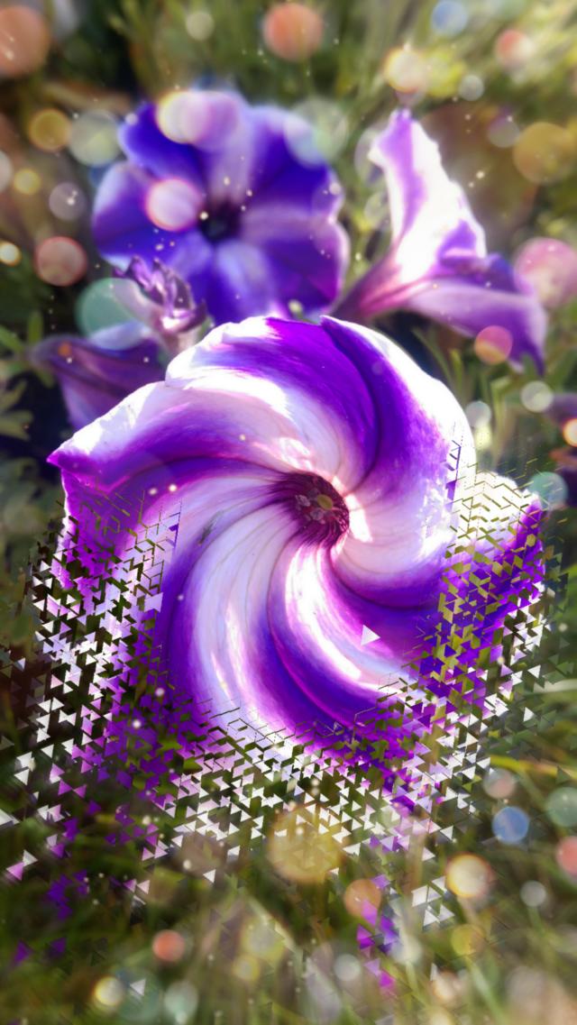 Summer vibes from my Garden - for U!😘🤗🌹 #naturephotography #august2020 #flowers #garden #myart #artisticeffect ##photography #artisticexpression
