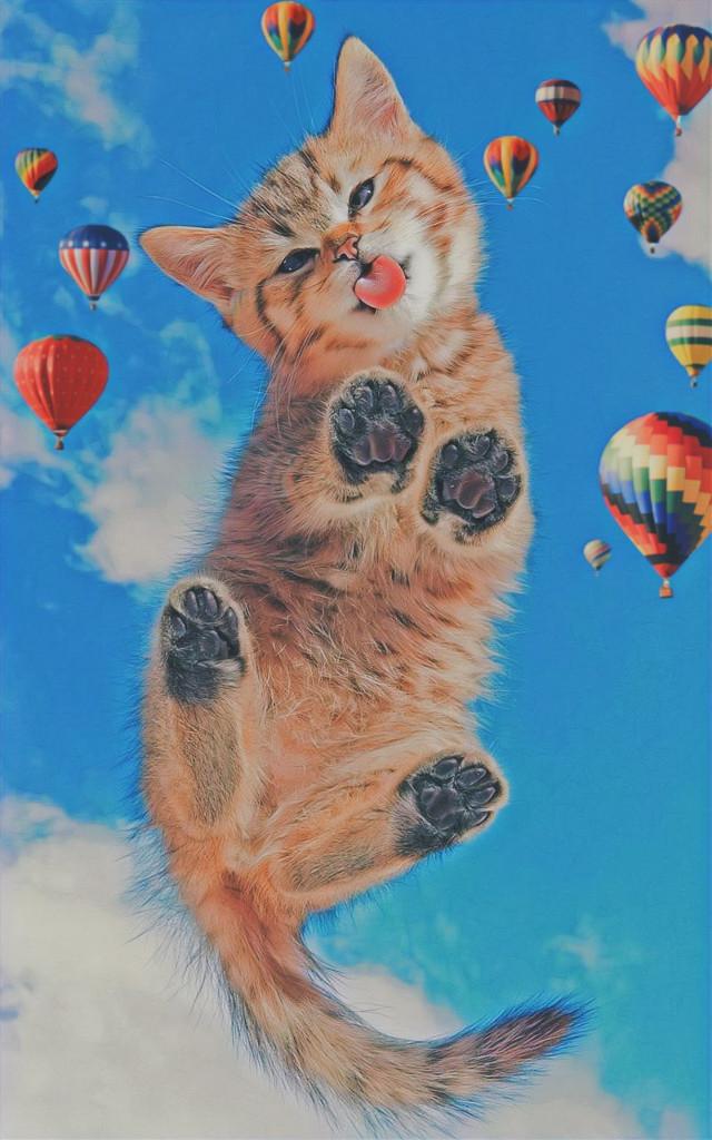 #freetoedit #cat#funnycat#edit
