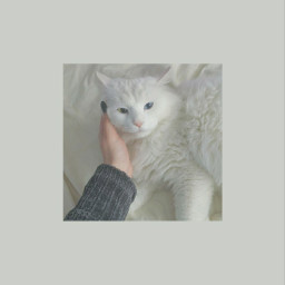 freetoedit cat cute kawaii cutecat cutecat😻 louistomlinson streamwalls lockscreen wallpaper catlockscreen white whiteaesthetic aesthetic aestheticbackground backround vintage grunge remixit