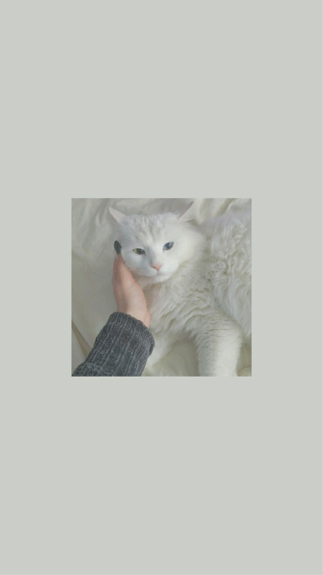 cat lockscreen🌪    #freetoedit #cat #cute #kawaii #cutecat #cutecat😻 #louistomlinson #streamwalls  #lockscreen #wallpaper #catlockscreen #white #whiteaesthetic #aesthetic #aestheticbackground #backround #vintage #grunge #remixit