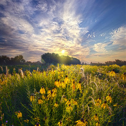 freetoedit remixit nature landscapephotography beauty pretty landscape flowers daisies love sunset wildflowers sunrise countryside summer follow fanart rural