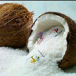 freetoedit coconut tolaugh