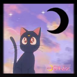 luna sailormoon cat anime oldanime cute sailorguardians magicalgirl magicalcat moon sailor japan japanese sailorjupiter sailormars sailorneptune sailorvenus sailormercury sailorsaturn freetoedit