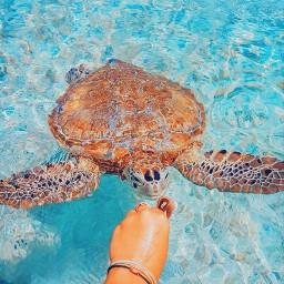 freetoedit summer filters vibes sea ocean turtle seaturtle cute animallover fyp xialuna