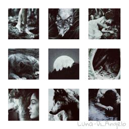 aesteticwolf freetoedit wolfblood wolf
