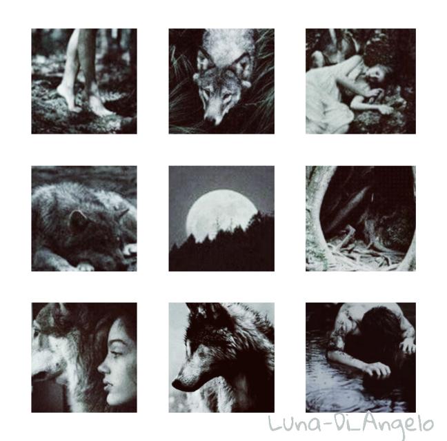 #aesteticwolf   #freetoedit  #wolfblood #wolf