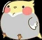 птичка мимими мило животные попугай попугайка freetoedit