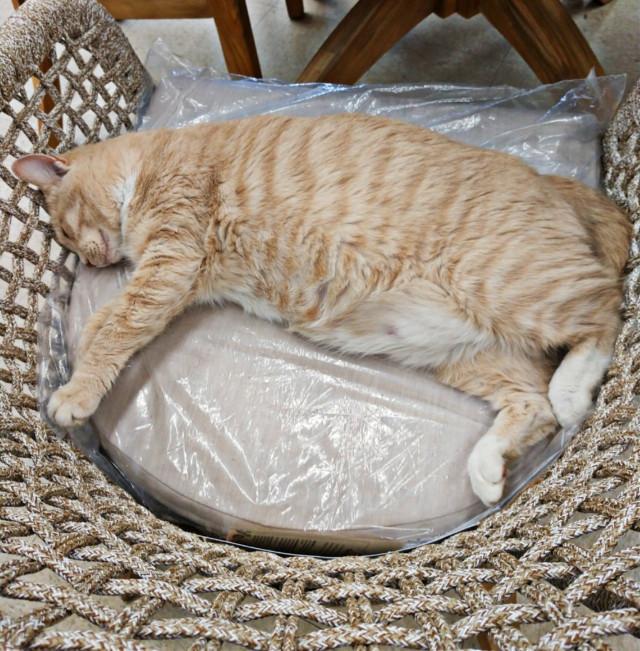 #animal #catsofpicsart #petsofpicsart #myphoto #animals #pet #cat #sleepy #tired #animalsofpicsart #cute #freetoedit